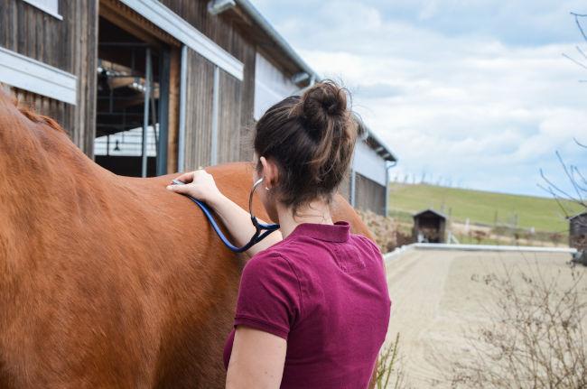 Untersuchung Pferd