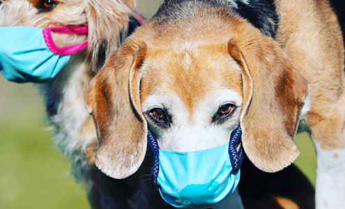 Hunde mit Atemschutzmaske