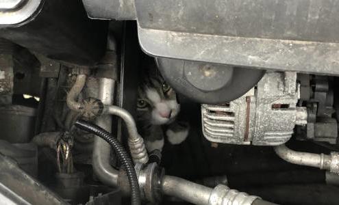 Katze im Motorraum beitragsbild